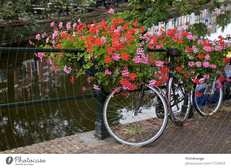 Bicycle on a bridge Amsterdam, Netherlands Nature Vacation & Travel Summer Tree Flower Landscape Architecture Blossom Spring Sports Lake Tourism Watercraft Park