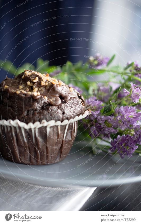 chocolate muffin Food Dough Baked goods Cake Dessert Chocolate Nutrition To have a coffee Diet Blossoming Fragrance Feasts & Celebrations To enjoy Fresh