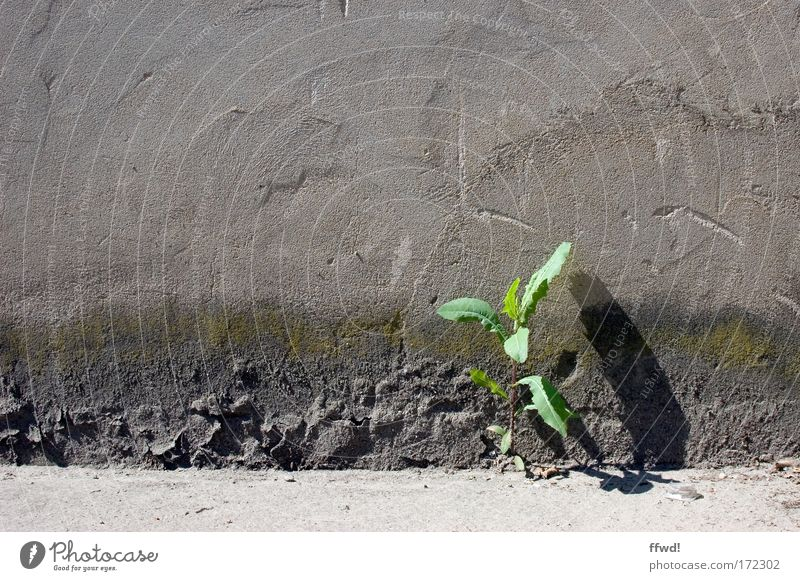 Plant Loneliness Life Wall (building) Environment Freedom Wall (barrier) Power Facade Beginning Success Growth Perspective Hope Gloomy Uniqueness