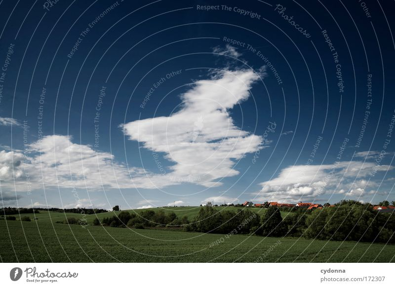 Sky Nature Beautiful Tree Summer Clouds Far-off places Life Meadow Freedom Landscape Environment Grass Movement Dream Field