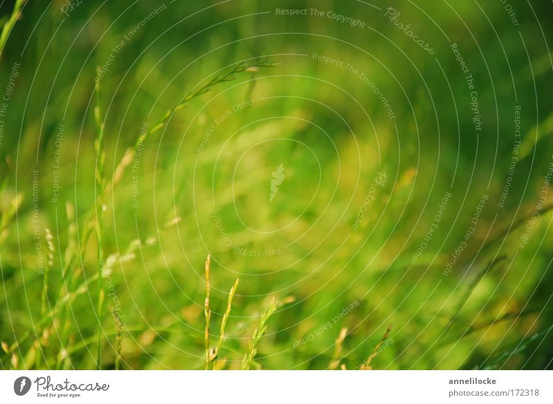 summer meadow Colour photo Exterior shot Close-up Deserted Day Shadow Sunlight Sunbeam Shallow depth of field Worm's-eye view Environment Nature Animal Summer
