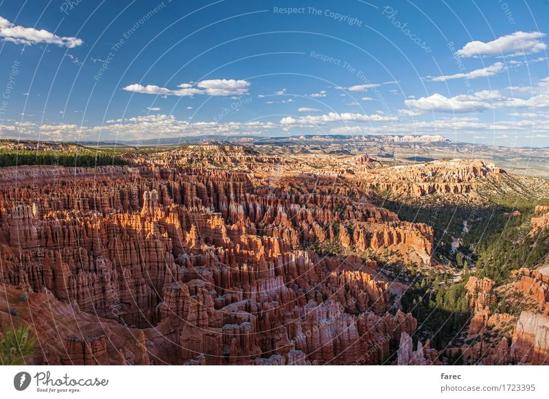 Bryce Canyon National Park Nature Landscape Plant Earth Sand Air Summer Beautiful weather Tree Desert Bryce Amphitheater Tourist Attraction Stone Observe