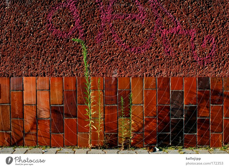 Nature Plant Red Leaf House (Residential Structure) Wall (building) Environment Freedom Grass Wall (barrier) Facade Growth Brick Moss Fight Juicy