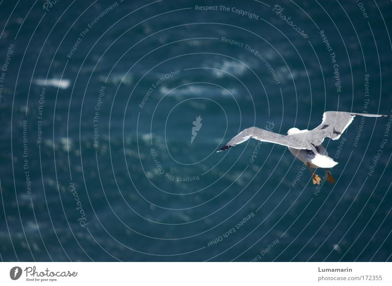Nature Water Blue White Ocean Vacation & Travel Animal Far-off places Environment Freedom Lanes & trails Waves Bird Flying Aviation