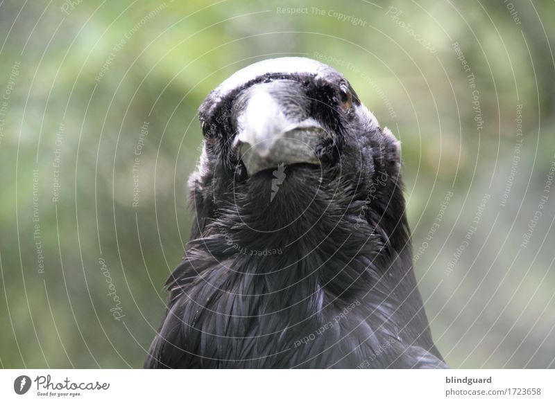 Nature Green Animal Calm Black Cold Gray Bird Wild animal Friendliness Curiosity Serene Watchfulness Animal face Zoo Captured