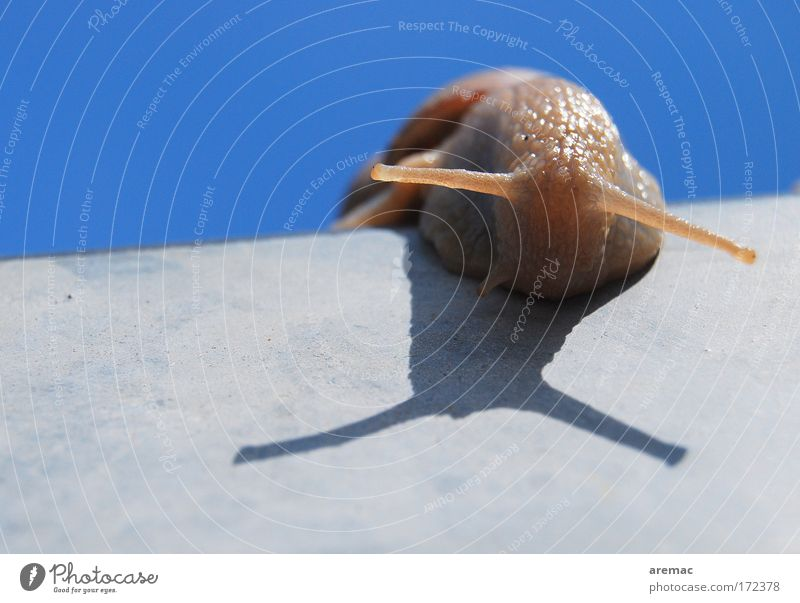 Sky Animal Movement Snail Feeler Cloudless sky
