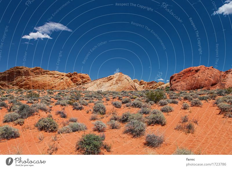 desert valley of fire Vacation & Travel Tourism Trip Adventure Far-off places Freedom Summer Sun Climbing Mountaineering Environment Nature Landscape Plant Sand