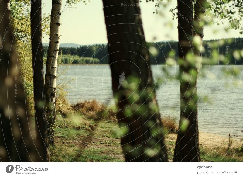 At the lake Colour photo Exterior shot Detail Deserted Copy Space right Copy Space bottom Day Shadow Contrast Sunlight Shallow depth of field