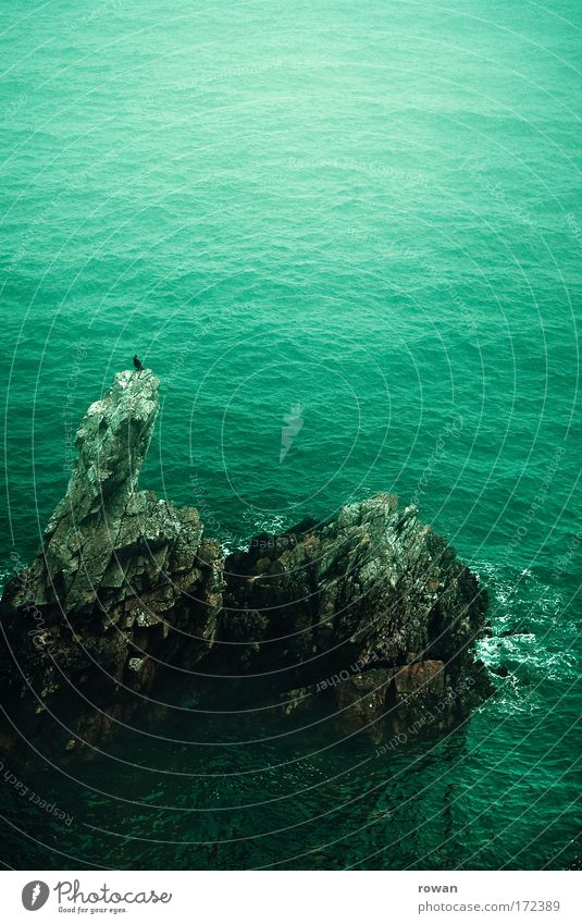 Ocean Green Calm Loneliness Dark Bird Coast Wait Rock Sit Island Vantage point Observe Uniqueness Point Serene