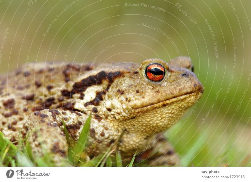 macro shot of common toad Nature Green Animal Adults Environment Life Funny Natural Brown Wild Cute Living thing European Horizontal Spotted Wilderness