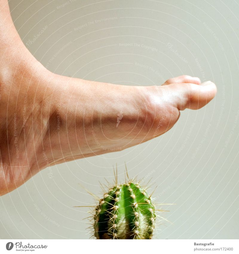 Plant Emotions Feet Legs Fear Threat Pain Disaster Toes Caution Stride Cactus Thorn Thorny Pierce Wound