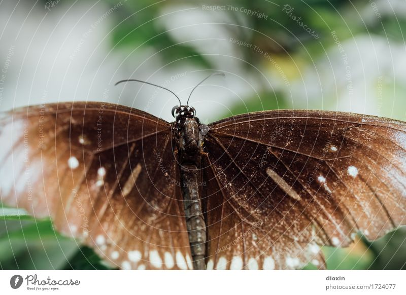 Old butterfly Environment Nature Animal Butterfly Wing Insect 1 Natural Ease Delicate Colour photo Close-up Detail Macro (Extreme close-up) Deserted Day Blur