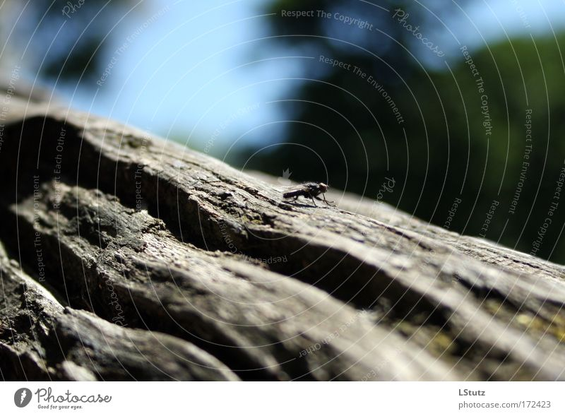 fly(nd depth of field) Nature Summer Tree Fly 1 Animal Crawl Sit Blue Gray Green Black Esthetic Calm Tree bark Tree trunk Colour photo Exterior shot
