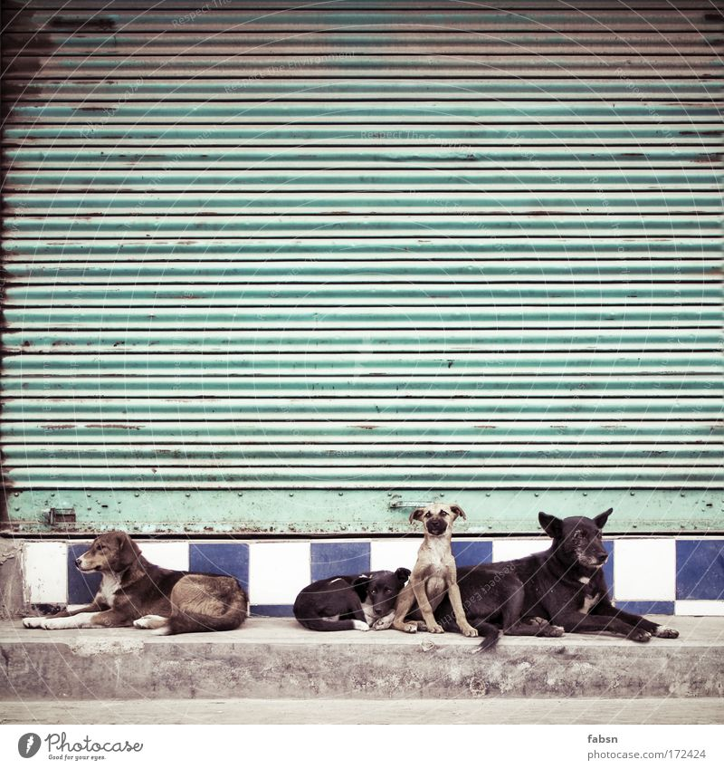 GANGS OF DARJEELING Colour photo Exterior shot Deserted Copy Space top Long shot Animal Dog 4 Pack Animal family Lie Looking Sit Together Curiosity Rolling door