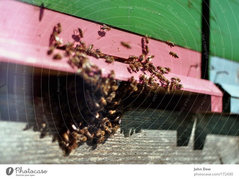 The Swarm Copy Space top Copy Space bottom Blur Motion blur Animal portrait Farm animal Bee Honey bee Group of animals Flock Green Pink Determination