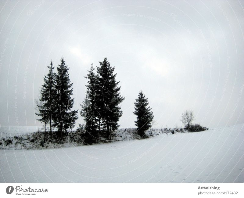 Nature Water Sky White Tree Blue Plant Winter Black Clouds Cold Snow Meadow Grass Landscape Air
