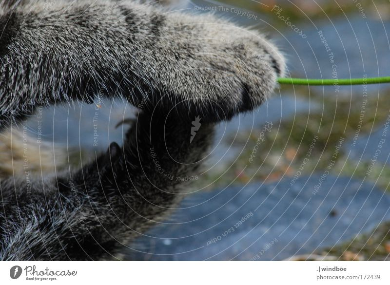 Within reach Colour photo Exterior shot Close-up Deserted Day Central perspective Long shot Animal Pet Cat Pelt Claw Paw 1 Touch Movement Lie Sit Playing Romp