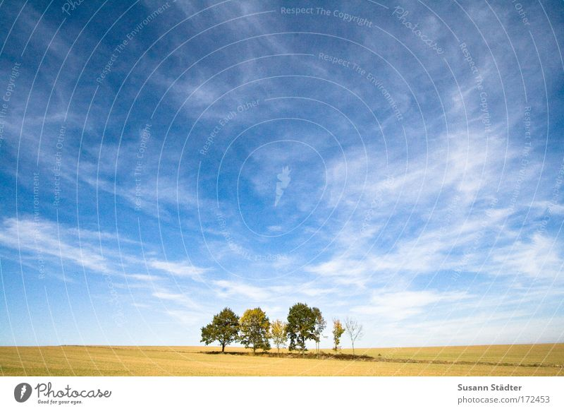 Sky Plant Summer Sun Tree Relaxation Clouds Leaf Animal Warmth Field Earth Climate Large Hill Agriculture