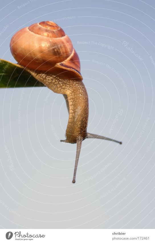 Don't do it!!! Colour photo Close-up Macro (Extreme close-up) Copy Space bottom Full-length Nature Animal Air Cloudless sky Snail To fall Hang Sadness Threat