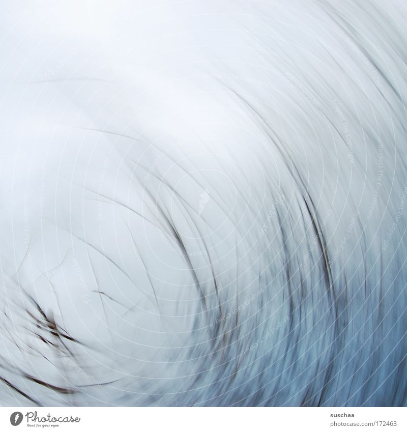 Nature Blue Winter Gray Line Abstract Round Branch Gale Dreary Natural phenomenon Force of nature
