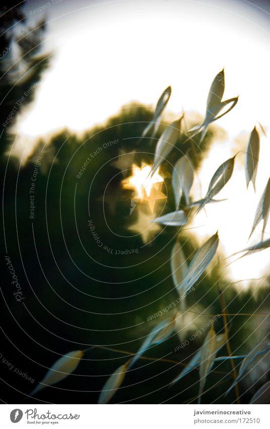 ::::Bokehstar:::: Nature Plant Landscape Environment Verdant