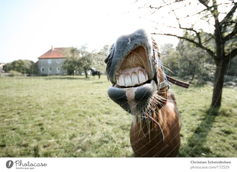 Green Joy Animal Life Brown Funny Horse Happiness Cool (slang) Animal face Uniqueness Cute Friendliness Brash