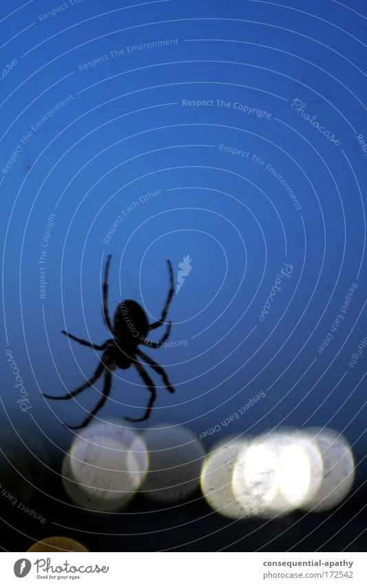 Blue White Animal Black Moody Network Hang Spider Crawl Night sky Thorny