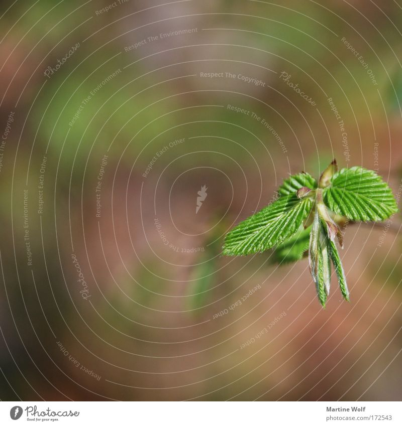 growth Environment Nature Plant Spring Leaf Foliage plant Growth Brown Green Rachis Leaf green Plantlet Colour photo Exterior shot Macro (Extreme close-up)