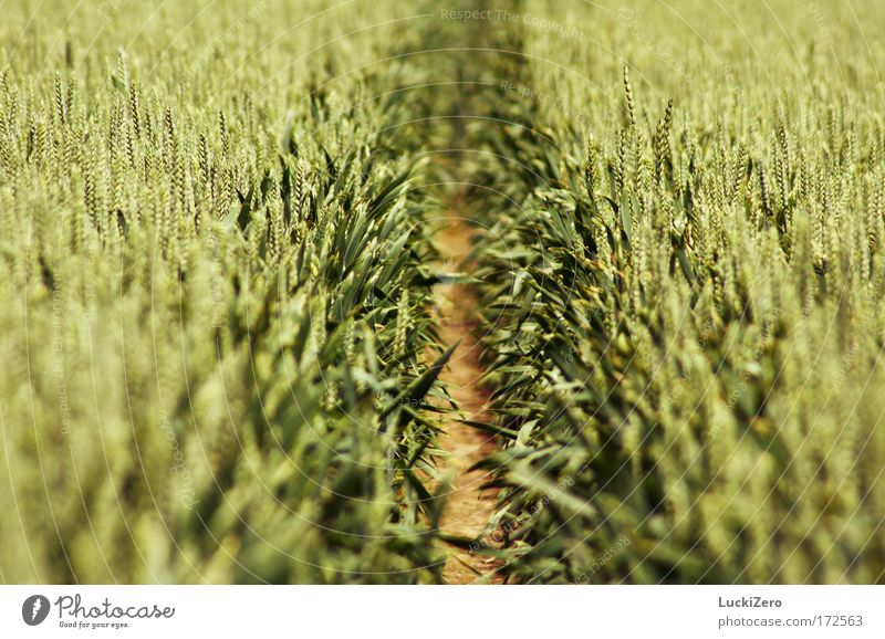 Nature Green Summer Plant Relaxation Yellow Environment Grass Lanes & trails Freedom Brown Field Earth Growth Agriculture
