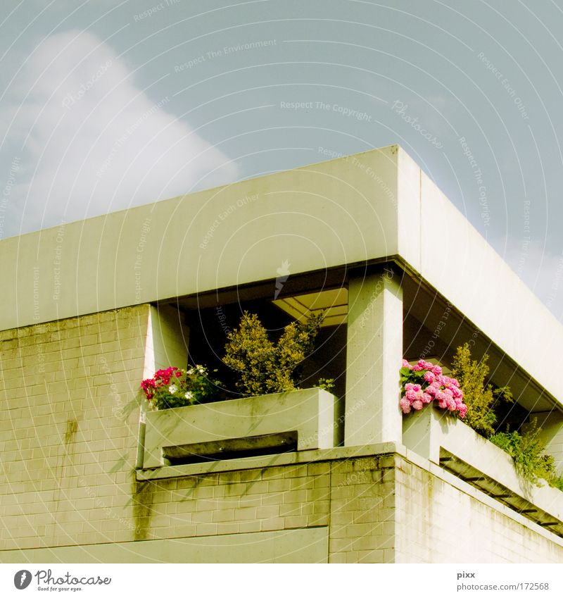 Plant Vacation & Travel Summer Flower Calm Architecture Flat (apartment) Concrete High-rise Living or residing Uniqueness Balcony Beautiful weather Square