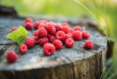 Plant Healthy Eating Lifestyle Nutrition Idyll Wellness Delicious Organic produce Dessert Berries Vegetarian diet Picnic Lunch Buffet