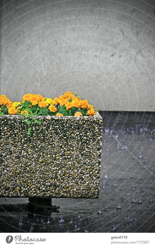 Flower City Gray Wall (barrier) Rain Orange Environment Wet Climate Damp Climate change Sustainability Graz Trough