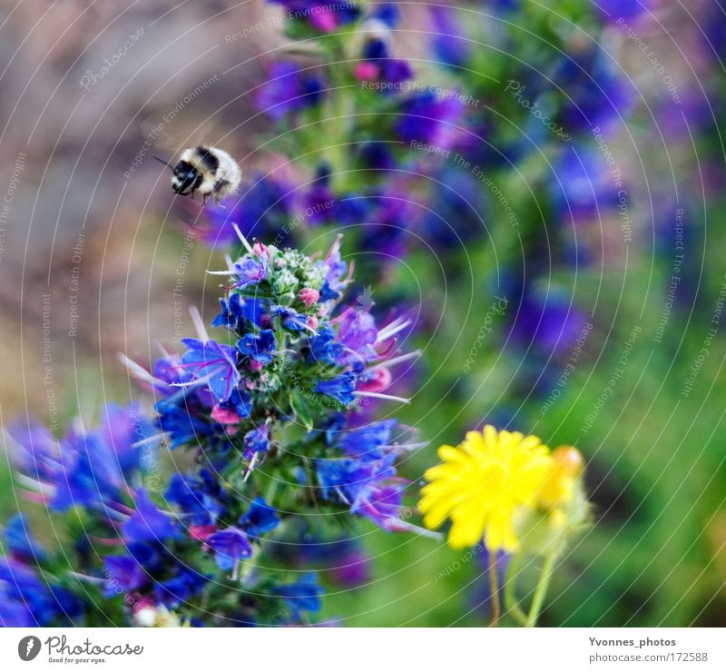 Nature Flower Green Blue Plant Summer Black Animal Yellow Work and employment Meadow Blossom Spring Park Landscape