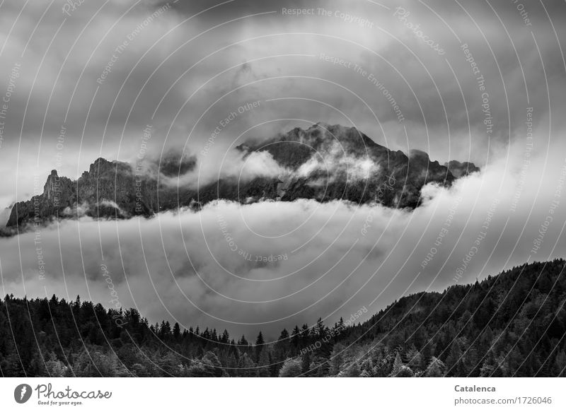 Hope for sun Trip Mountain Hiking Nature Landscape Plant Clouds Summer Bad weather Tree Fir tree Alps Peak Tall Gray Black White Reluctance Loneliness Moody