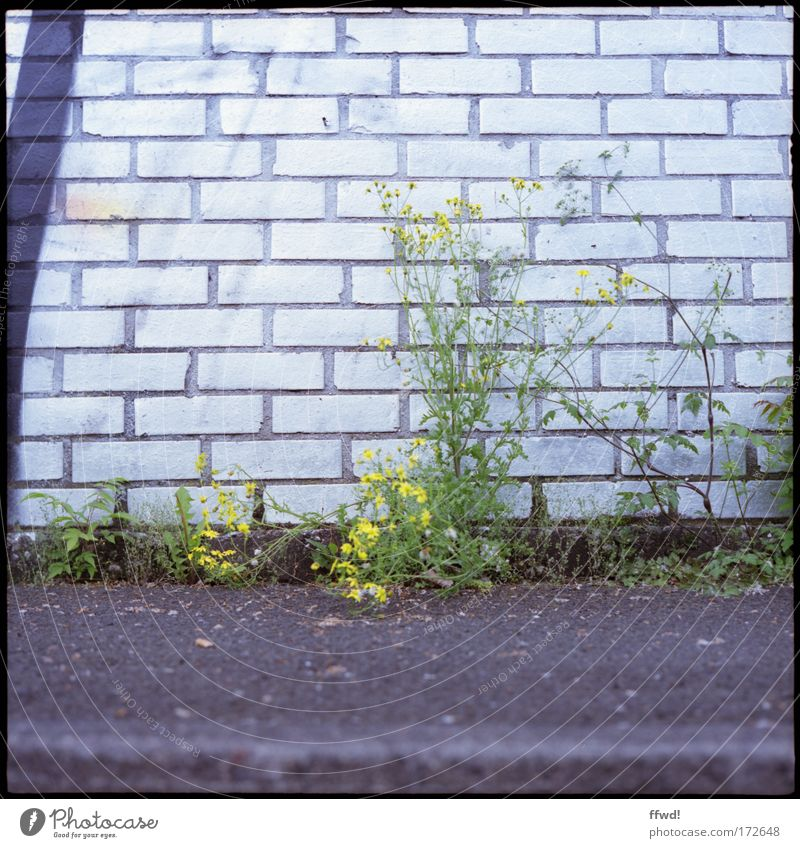 Nature Plant Life Wall (building) Environment Grass Lanes & trails Wall (barrier) Power Facade Growth Future Change Bushes Transience Asphalt