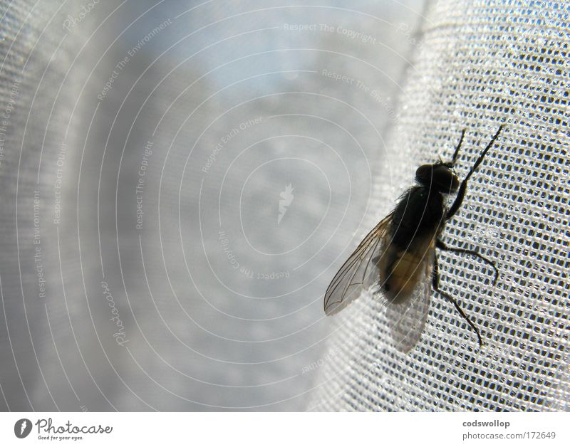 521. search Result for 'fliege' Colour photo Interior shot Close-up Macro (Extreme close-up) Copy Space left Copy Space top Deep depth of field Nature Fly