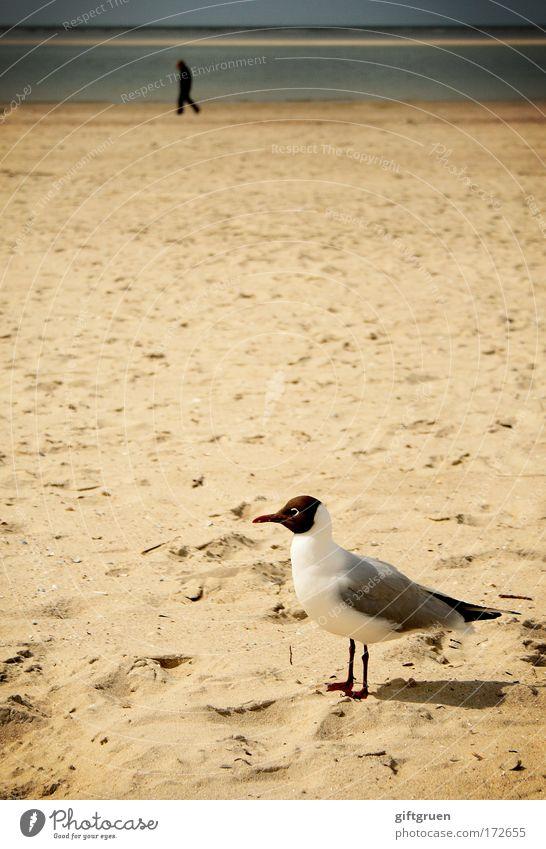 Human being Man Nature Summer Beach Loneliness Animal Sand Landscape Bird Coast Adults Going Horizon Island Vantage point