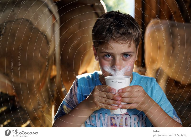 milk drinker Dairy Products Beverage Drinking Cold drink Milk Mug milk foam Cowshed Facial hair milk mug Moustache Colour photo Looking into the camera