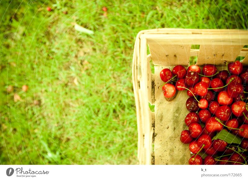 cherry harvest Colour photo Exterior shot Day Food Fruit Cherry Summer Garden Gardening Grass Meadow Fresh Healthy Natural Clean Green Red Nature Pure