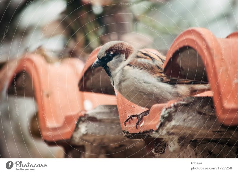 Sparrow Nature Beautiful Green Tree Leaf House (Residential Structure) Brown Bird Wild Sit Feather Cute Tile Beak Ornithology Wonderful