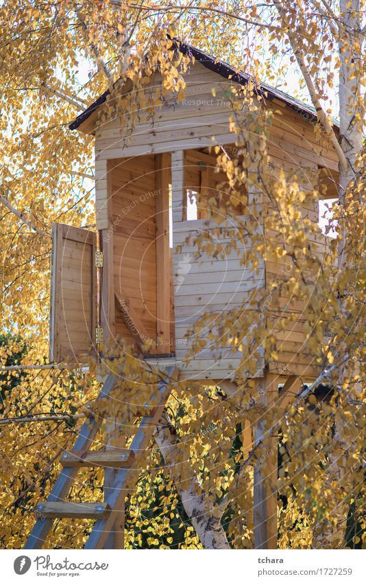 Wooden house on a tree Playing Summer House (Residential Structure) Garden Child Nature Landscape Tree Park Forest Playground Building Architecture Balcony