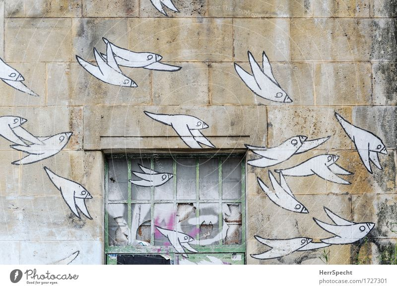 squadrons Art Work of art Town Manmade structures Wall (barrier) Wall (building) Window Stone Glass Metal Graffiti Elegant Trashy Brown White Bird