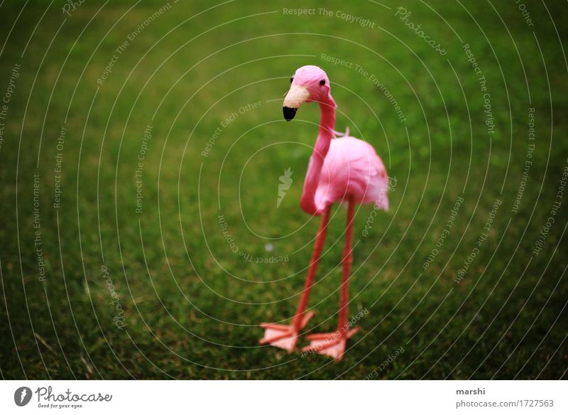 Penelope II Garden Park Meadow Animal 1 Emotions Moody Green Pink Flamingo Decoration Funny Vignetting Small Sweet Animal protection Zoo Exterior shot Detail