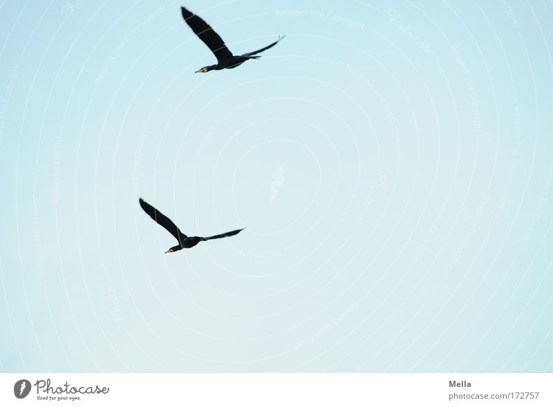 The Double Cormorant Colour photo Exterior shot Deserted Copy Space right Copy Space bottom Day Worm's-eye view Full-length Environment Nature Animal Air