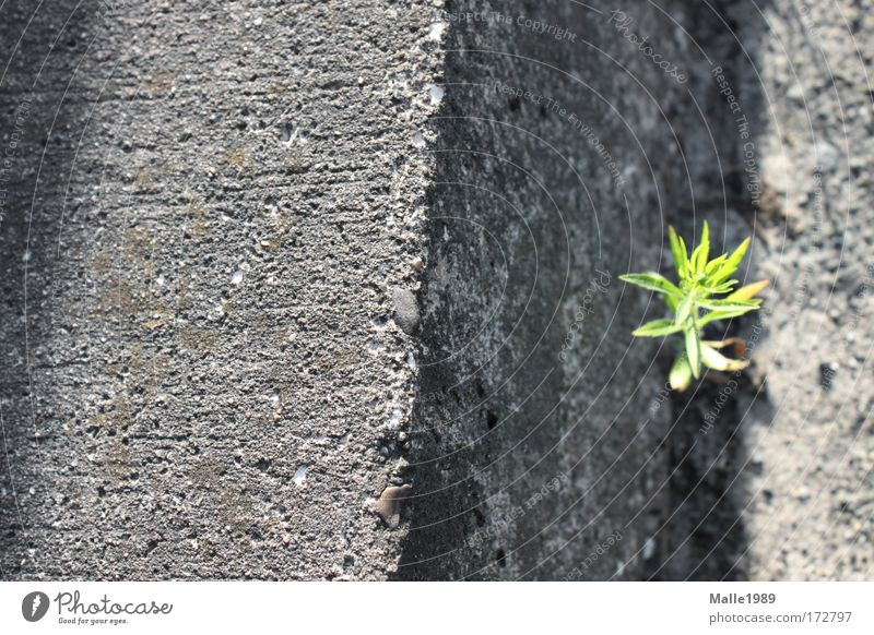Nature Green Beautiful Plant Sun Summer Loneliness Street Meadow Environment Wall (building) Gray Happy Wall (barrier) Power Free