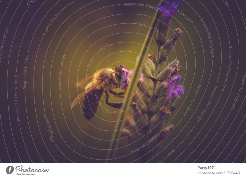 pollen collector Animal Farm animal Bee 1 Work and employment To feed Brown Yellow Green Violet Diligent Endurance Sustainability Nature Colour photo