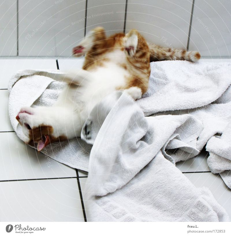 Emotions Joy Animal Happy Cat Contentment Happiness Bathroom Motion blur Joie de vivre (Vitality) 1 To enjoy Cozy Pet Towel
