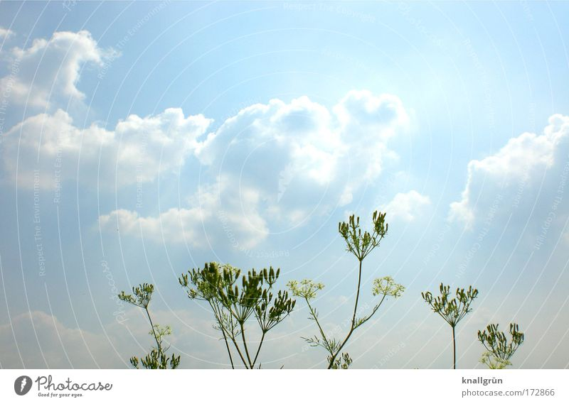 Nature Sky White Green Blue Plant Summer Clouds Bright Environment Blossoming River bank Foliage plant Cumulus Glistening