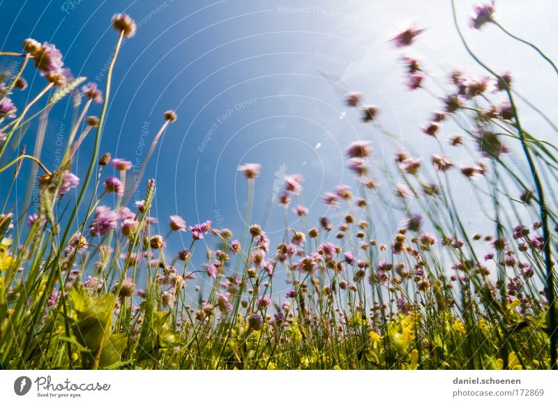 Nature Sun Flower Green Blue Plant Summer Far-off places Colour Meadow Blossom Grass Movement Pink Wind Perspective