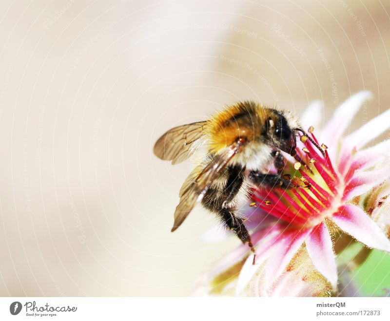 Blossom Search Wing Blossoming Bee Versatile Honey bee